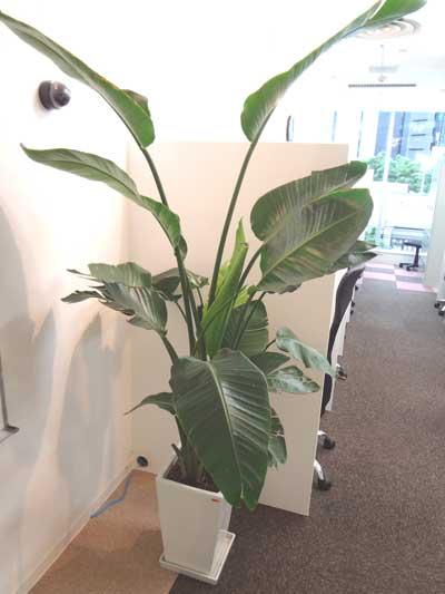 自習室 大阪、大阪梅田1号店にある、入口の観葉植物